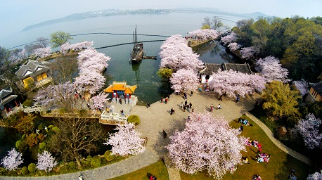 2017中国无锡太湖鼋头渚国际樱花节盛大开幕